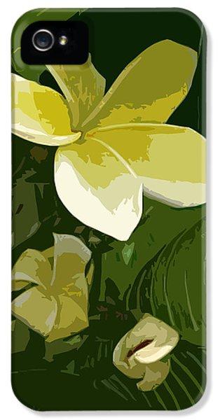 Yellow And White Plumeria Flower Frangipani iPhone 5 Cases - Plumeria Yellow Jack iPhone 5 Case by Michael Baum