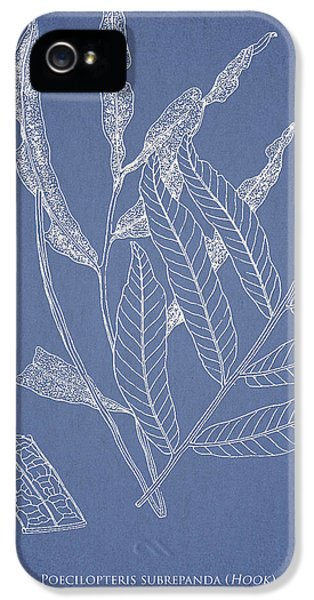 Fern iPhone 5 Cases - Poecilopteris subrepanda iPhone 5 Case by Aged Pixel