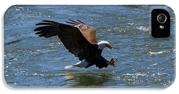 American Bald Eagle iPhone 5 Cases - Poised to Catch iPhone 5 Case by Mike  Dawson
