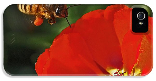 Bee iPhone 5 Cases - Pollination iPhone 5 Case by Rona Black