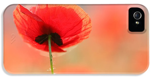 Flower iPhone 5 Cases - Poppy Dream iPhone 5 Case by Roeselien Raimond