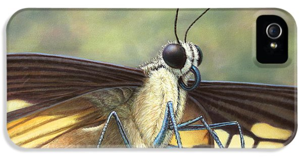 Bug iPhone 5 Cases - Portrait of a Butterfly iPhone 5 Case by James W Johnson
