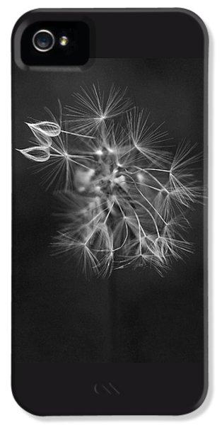 Portrait Of A Dandelion IPhone 5 / 5s Case by Rona Black
