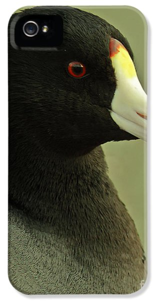 Bird Watcher iPhone 5 Cases - Portrait Of An American Coot iPhone 5 Case by Robert Frederick