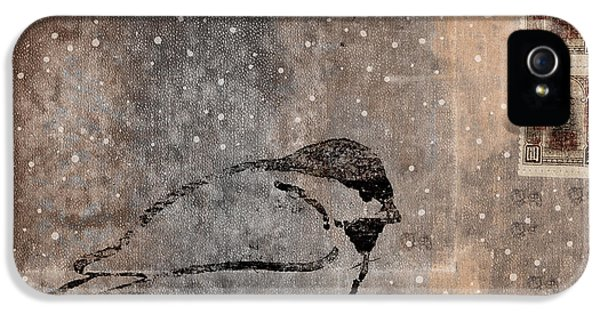 Black Snow iPhone 5 Cases - Postcard Chickadee in the Snow iPhone 5 Case by Carol Leigh