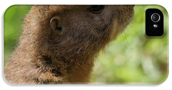 Prairie Dog Portrait IPhone 5 / 5s Case by Dan Sproul