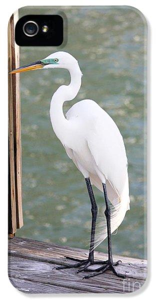 Pretty Great Egret IPhone 5 / 5s Case by Carol Groenen