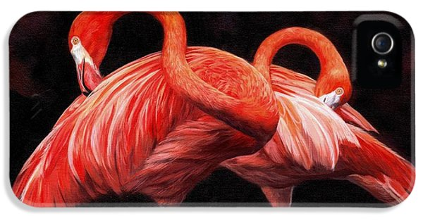 Flamingo iPhone 5 Cases - Pretty in Pink iPhone 5 Case by David Stribbling