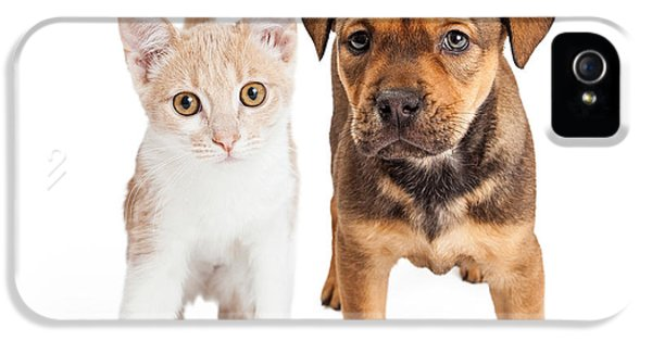 Indoors iPhone 5 Cases - Puppy and Kitten Standing Together iPhone 5 Case by Susan  Schmitz