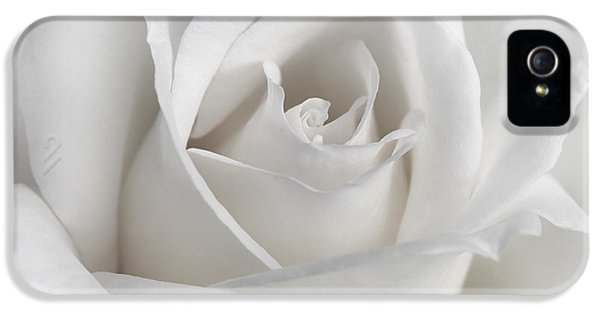 Ivory Flower iPhone 5 Cases - Purity of a White Rose Flower iPhone 5 Case by Jennie Marie Schell