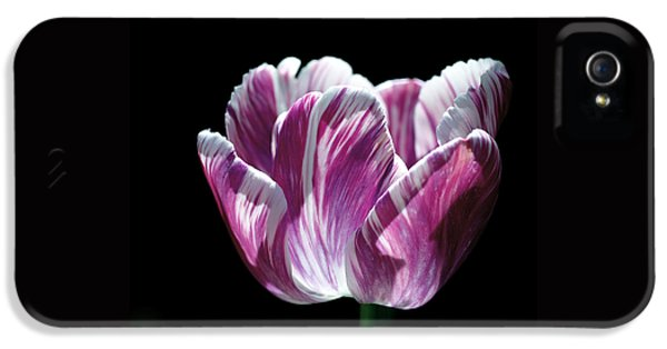 Purple And White Marbled Tulip IPhone 5 / 5s Case by Rona Black