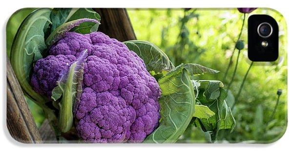 Purple Cauliflower IPhone 5 / 5s Case by Aberration Films Ltd