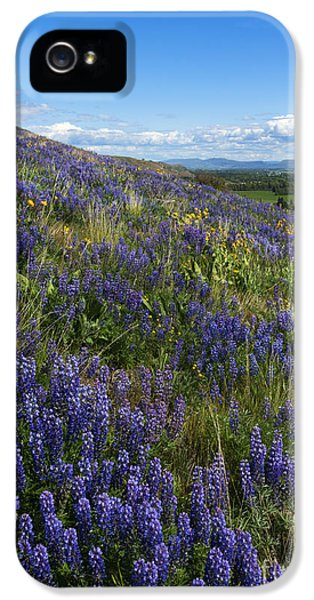 Lupine iPhone 5 Cases - Purple Fields iPhone 5 Case by Mike  Dawson