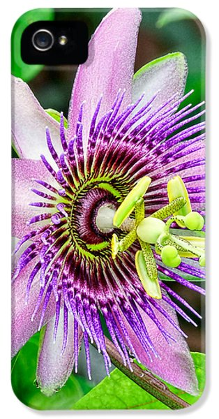 Christopher Holmes Photography iPhone 5 Cases - Purple Passion II iPhone 5 Case by Christopher Holmes