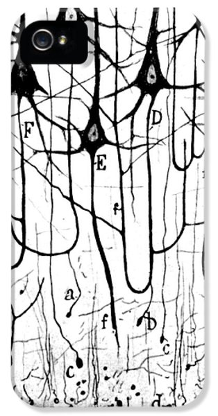 Medical iPhone 5 Cases - Pyramidal Cells Illustrated By Cajal iPhone 5 Case by Science Source
