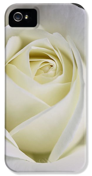 Ivory Rose iPhone 5 Cases - Queen Ivory Rose Flower 2 iPhone 5 Case by Jennie Marie Schell