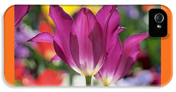 Blooms iPhone 5 Cases - Radiant Purple Tulips iPhone 5 Case by Rona Black