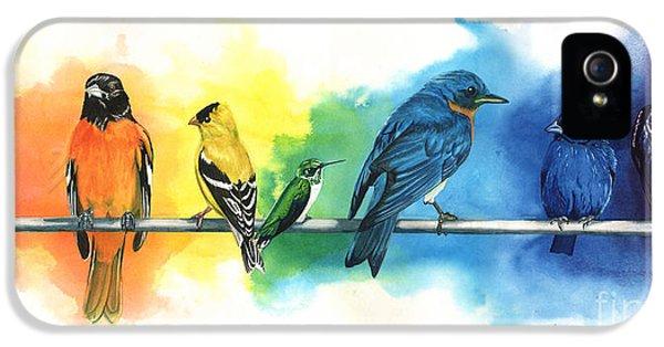 Songbird iPhone 5 Cases - Rainbow Birds iPhone 5 Case by Antony Galbraith