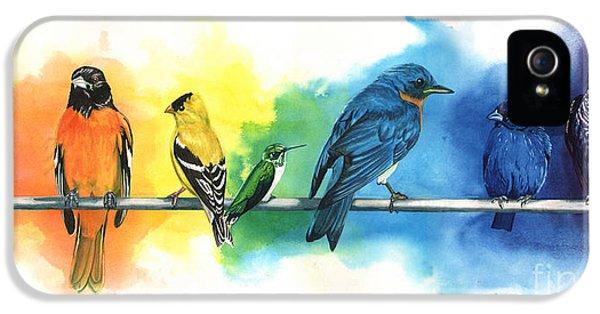 Animals iPhone 5 Cases - Rainbow Birds iPhone 5 Case by Antony Galbraith