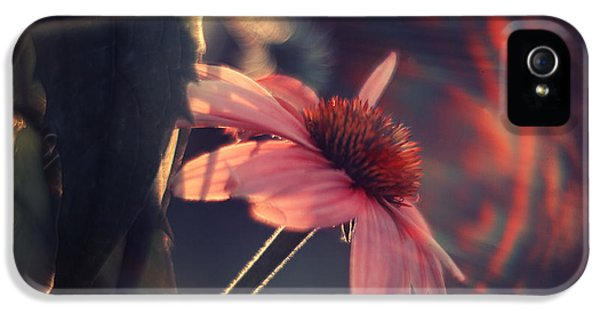Echinacea iPhone 5 Cases - Rainbow Flower iPhone 5 Case by Magda  Bognar