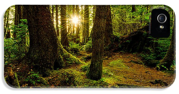 Pacific Northwest iPhone 5 Cases - Rainforest Path iPhone 5 Case by Chad Dutson