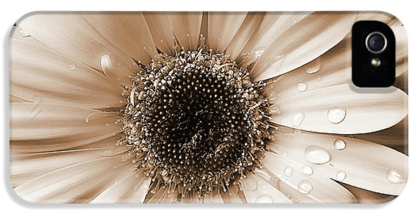 Close Up iPhone 5 Cases - Rainsdrops on Gerber Daisy Sepia iPhone 5 Case by Jennie Marie Schell