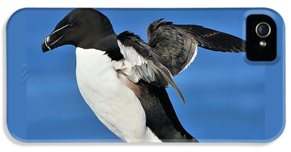 Razorbill IPhone 5 / 5s Case by Tony Beck