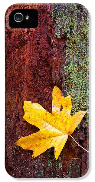 Leaf iPhone 5 Cases - Reclamation iPhone 5 Case by Mike  Dawson