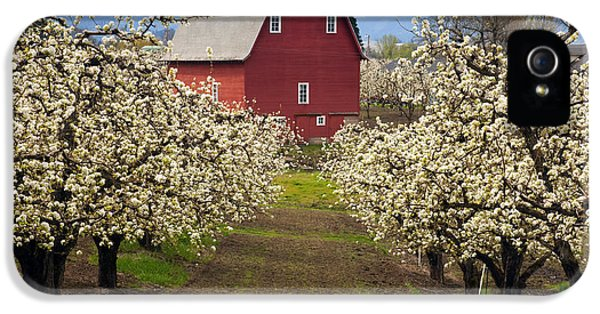 Agriculture iPhone 5 Cases - Red Barn Spring iPhone 5 Case by Mike  Dawson