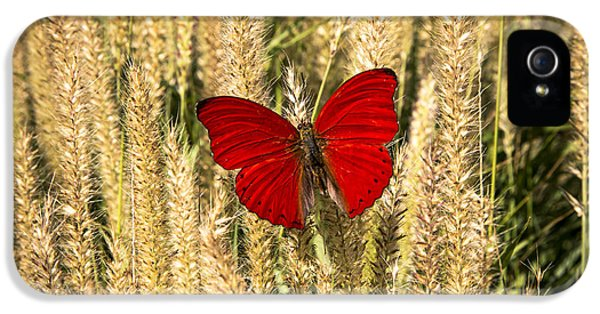 Softly iPhone 5 Cases - Red Butterfly In The Tall Weeds iPhone 5 Case by Garry Gay