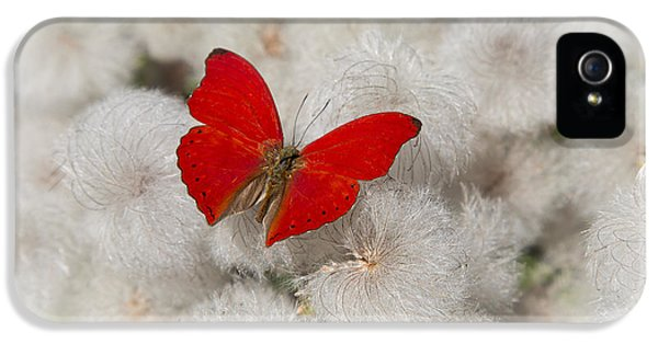 Softly iPhone 5 Cases - Red Butterfly on Flower Fluff iPhone 5 Case by Garry Gay