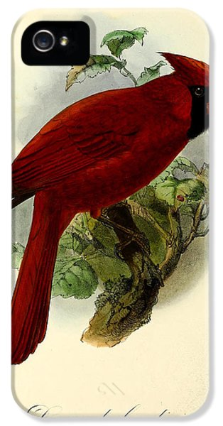 Red Cardinal IPhone 5 / 5s Case by J G Keulemans