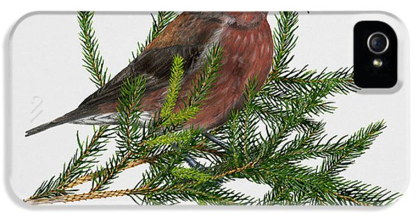 Red Crossbill -common Crossbill Loxia Curvirostra -bec-crois Des Sapins -piquituerto -krossnefur  IPhone 5 / 5s Case by Urft Valley Art
