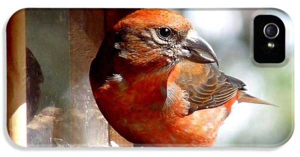 Red Crossbill IPhone 5 / 5s Case by Marilyn Burton