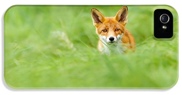 Young Foxes iPhone 5 Cases - Red Fox in a Sea of Green iPhone 5 Case by Roeselien Raimond