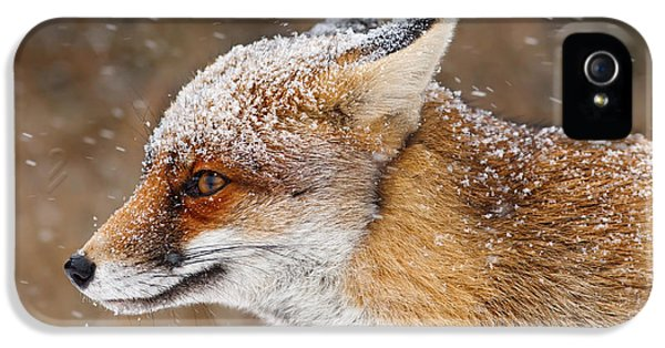 Red Fox iPhone 5 Cases - Red Fox in a Snow Storm iPhone 5 Case by Roeselien Raimond