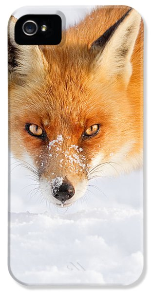 Red Fox iPhone 5 Cases - Red Fox in the Snow iPhone 5 Case by Roeselien Raimond