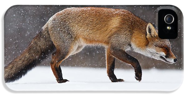 Red Fox iPhone 5 Cases - Red fox trotting through a snowshower iPhone 5 Case by Roeselien Raimond