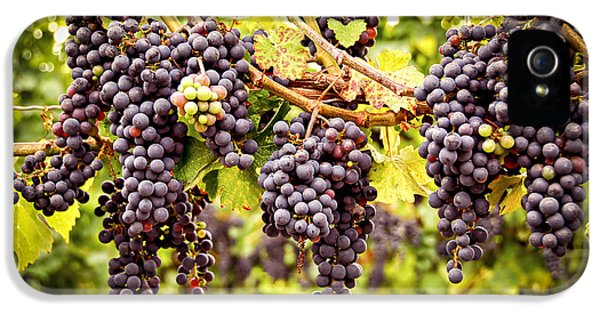 Red Grapes In Vineyard IPhone 5 / 5s Case by Elena Elisseeva