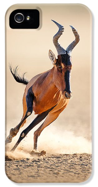 Speed iPhone 5 Cases - Red hartebeest running iPhone 5 Case by Johan Swanepoel