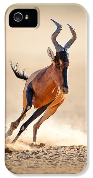 Energy iPhone 5 Cases - Red hartebeest running iPhone 5 Case by Johan Swanepoel