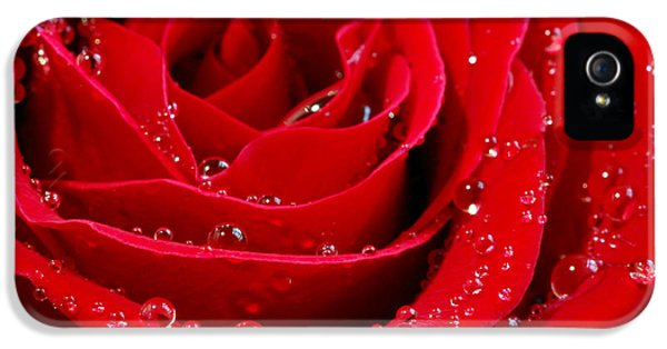 Tender iPhone 5 Cases - Red rose iPhone 5 Case by Elena Elisseeva
