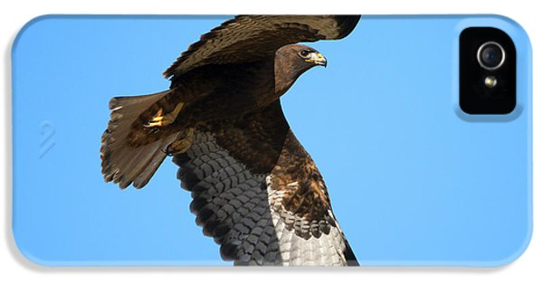 Red Tailed Hawk iPhone 5 Cases - Red-Tail Flight iPhone 5 Case by Mike Dawson
