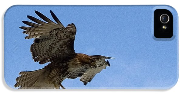 Red Tailed Hawk iPhone 5 Cases - Red Tail Hawk iPhone 5 Case by Bill Gallagher