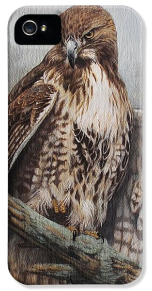 Red Tailed Hawk iPhone 5 Cases - Red Tail Hawk iPhone 5 Case by Ken Everett