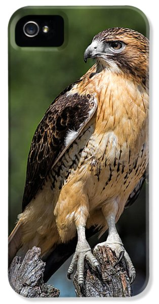Red Tailed Hawk iPhone 5 Cases - Red Tail Hawk Portrait iPhone 5 Case by Dale Kincaid