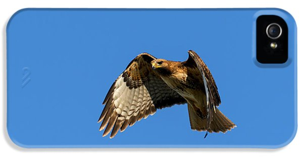 Red Tailed Hawk iPhone 5 Cases - Red-Tail Hover iPhone 5 Case by Mike  Dawson