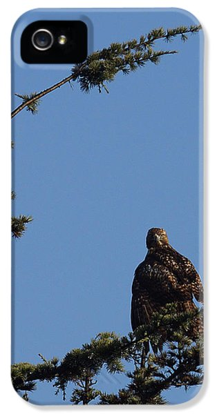 Redtail iPhone 5 Cases - Red Tailed Hawk 2 iPhone 5 Case by Ernie Echols