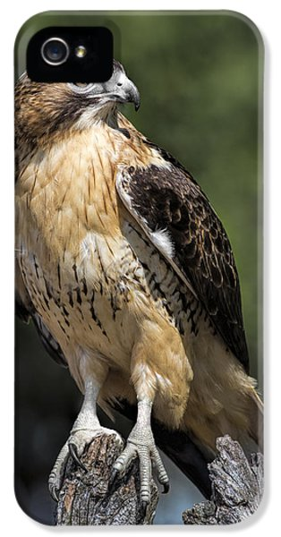 Red Tailed Hawk iPhone 5 Cases - Red Tailed Hawk iPhone 5 Case by Dale Kincaid
