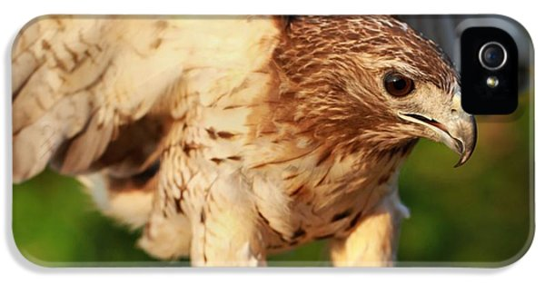Red Tailed Hawk Hunting IPhone 5 / 5s Case by Dan Sproul